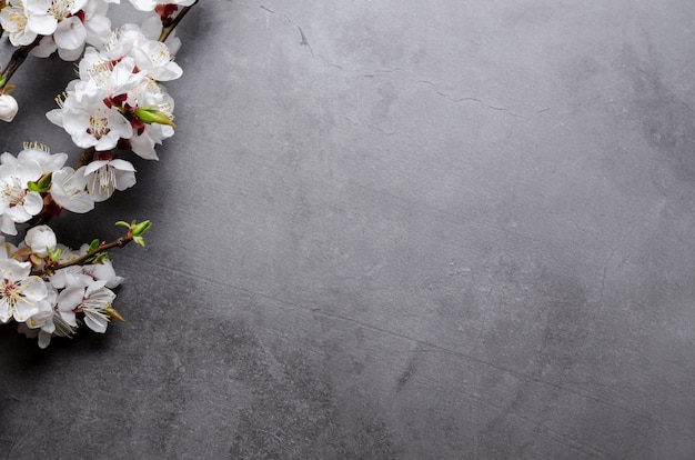 Spring flowers with branches blossoming apricots on grey background. flat lay concept.