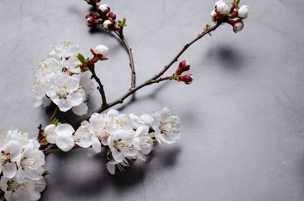 Spring flowers with branches blossoming apricots on grey background