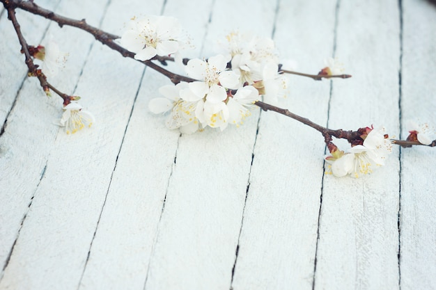 Spring flowers on wooden table background. plum blossom.