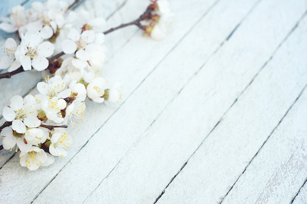 Spring flowers on wooden table background. plum blossom