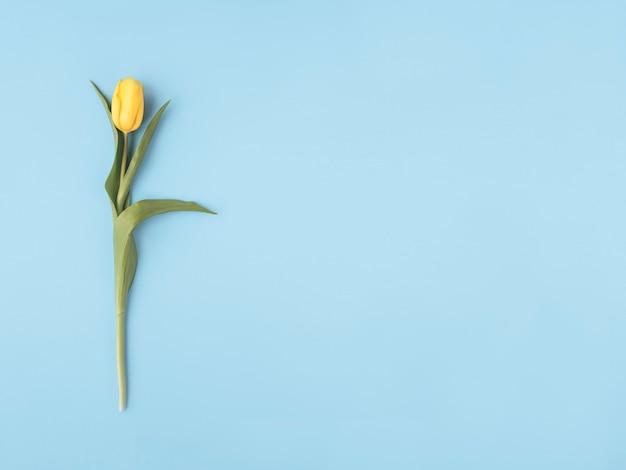 봄 꽃. 파스텔 블루 바탕에 노란 꽃입니다. 평평한 누워, 평면도. 최소한의 개념. 텍스트를 추가하십시오.