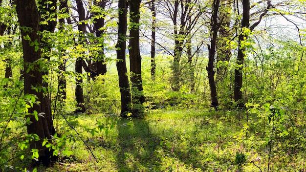 晴天の春の森、春