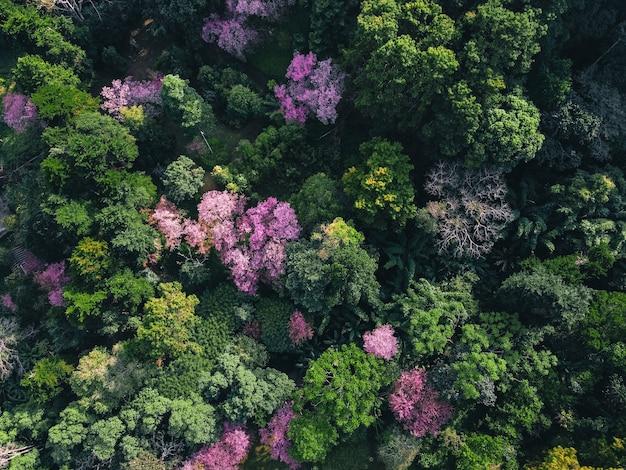 Весенний лес, розовые цветущие деревья и зеленый лес сверху в лесу