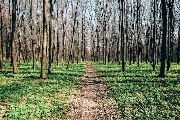 春の森の木。自然緑の木の日光の背景。空