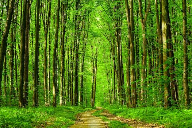 봄 숲 나무. 자연 녹색 나무 햇빛. 하늘