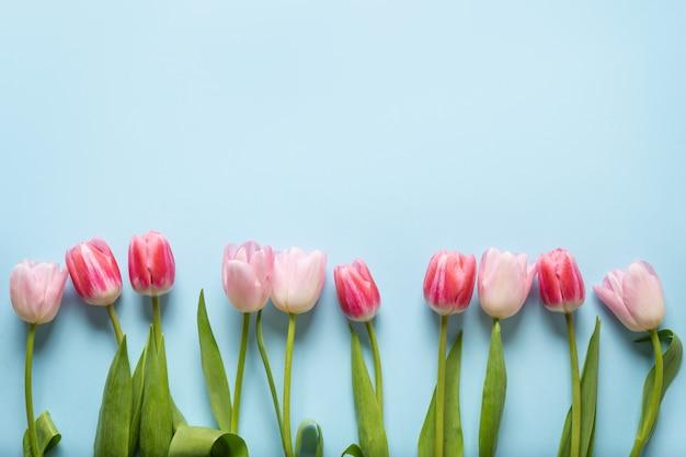 Весенняя рамка из розовых тюльпанов на синем фоне.