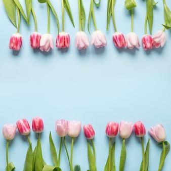 青にピンクのチューリップの春のフレーム。花柄。