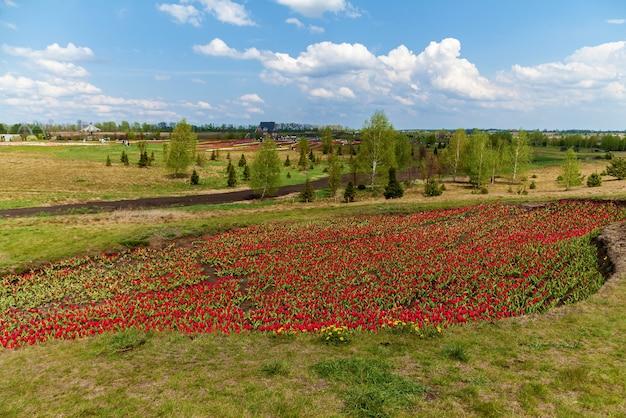 カントリーハウスの花壇に赤いチューリップの春の庭。花壇のカラフルなチューリップ。庭の美しい春のチューリップ