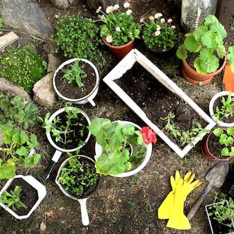 Весенние садовые саженцы в горшках