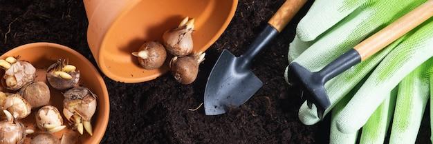 春のガーデニングの背景。肥沃な土性の背景にガーデニングツール、植木鉢、クロッカスの球根。上面図、バナー。