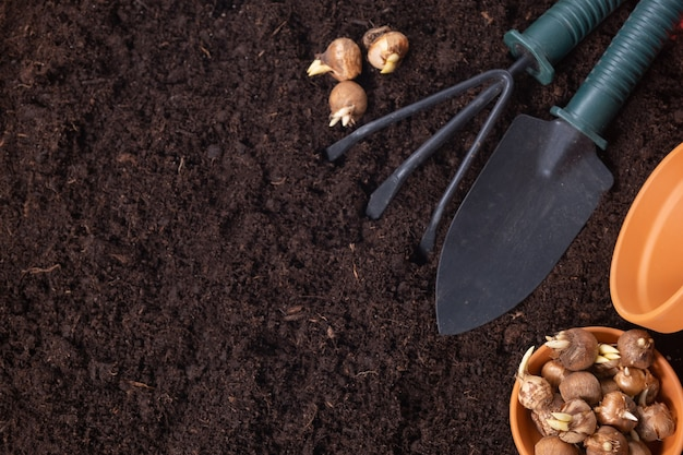 Spring gardening background. gardening tools, flower pots and crocus bulbs on fertile soil texture background. top view, copy space.