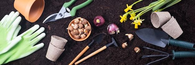 春のガーデニングの背景。肥沃な土性の背景にヒヤシンスとクロッカスの球根を持つガーデニングツール。上面図、バナー。