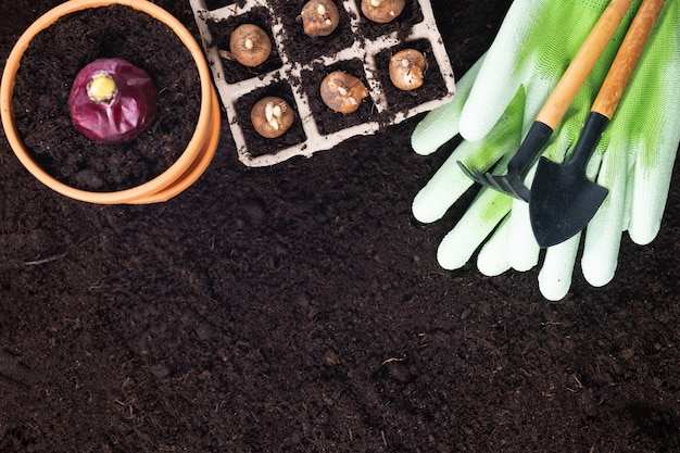 Spring gardening background. gardening tools with hyacinth and crocus bulbs on fertile soil texture background. top view, copy space.