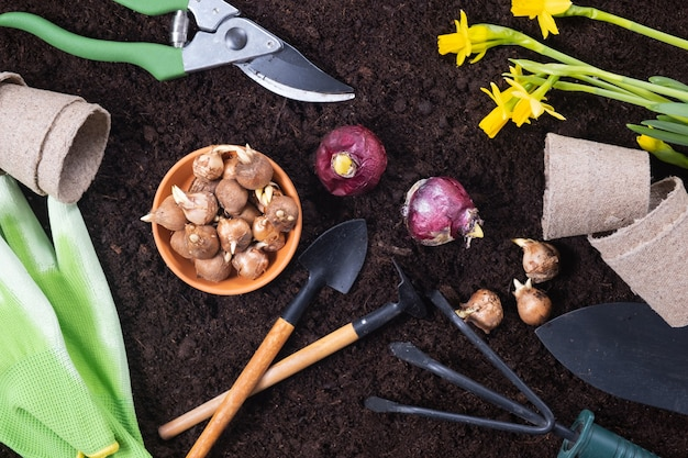 Spring gardening background. gardening tools with hyacinth and crocus bulbs on fertile soil texture background. top view.
