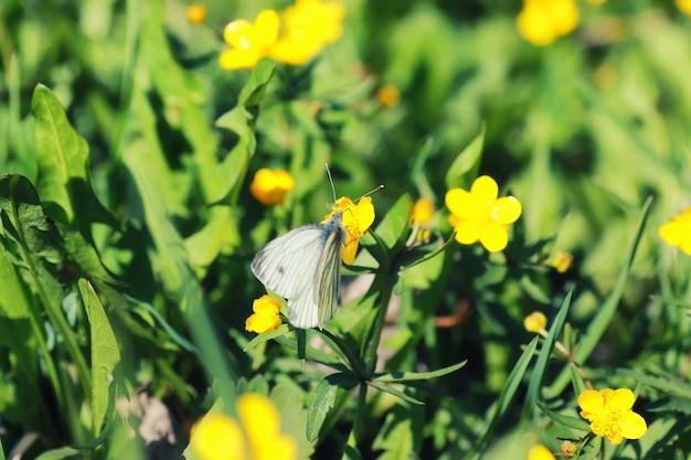 Весенняя трава и цветок в поле