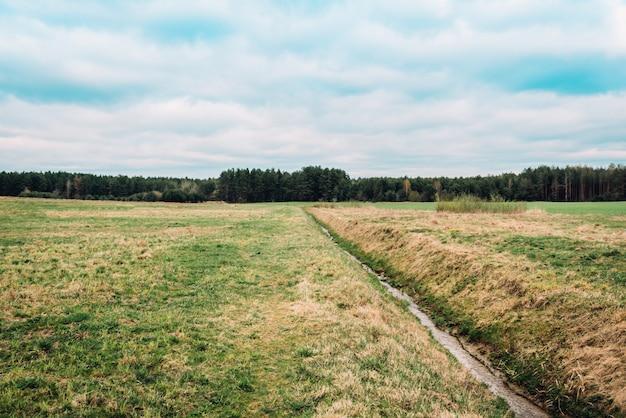 ベラルーシの春の緑のフィールド。日没の風景です。屋外の田舎の草原の草の自然。農村の草原の風景です。