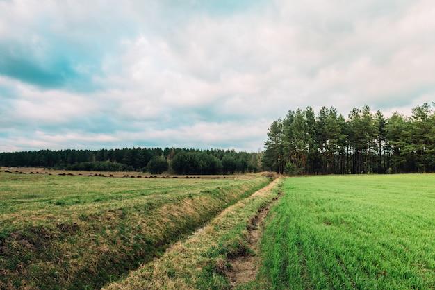 Весенние зеленые поля в беларуси. закатный пейзаж. открытый сельской местности луговой траве природа.