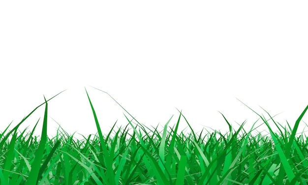 Spring green grass on a white background with free space for your text