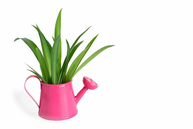 Весеннее зеленое растение в лейке концепция домашнего садоводства