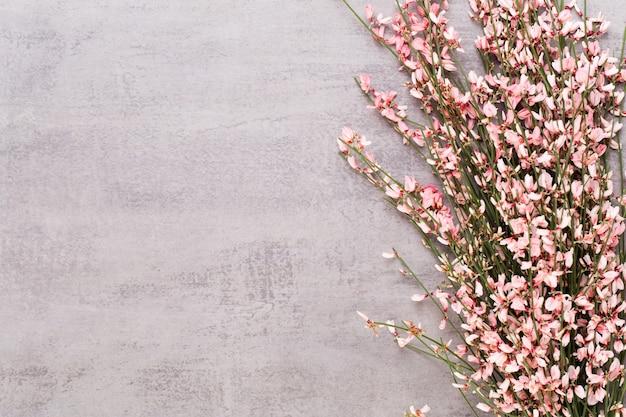 Весенняя открытка, живые цветы кораллового цвета на пастельном фоне.