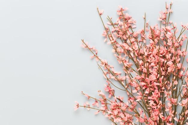 春のグリーティングカード、パステルカラーの背景に生きている珊瑚色の花