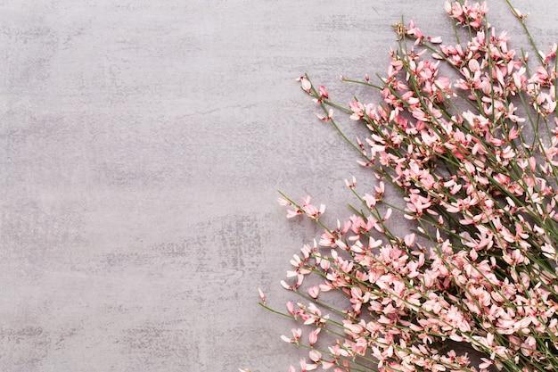 春のグリーティングカード、パステルカラーの背景に生きている珊瑚色の花。