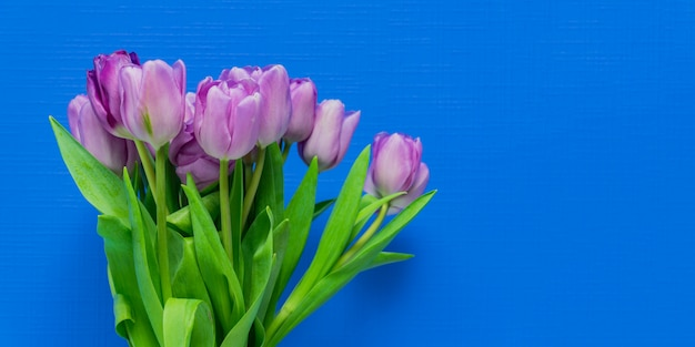 Spring greeting card. purple tulips bouquet on blue background. woman day concept. copyspace for text. banner