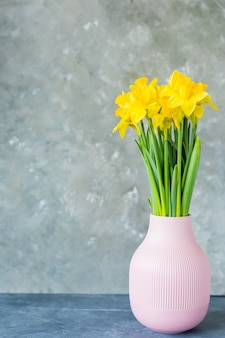 Spring greeting card. spring flowers, yellow daffodils in a vase on a grey background