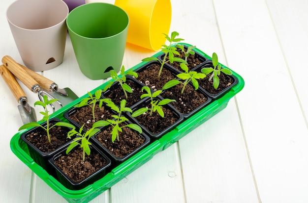 コンテナで春に育つ野菜の苗、有機農業の概念。スタジオ写真