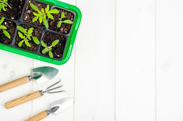 コンテナ有機農業の概念で春に成長する野菜の苗
