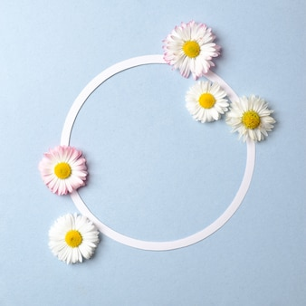 Spring holiday concept. creative layout made of daisy flowers and blank circle-shaped paper card outline on pastel blue background.