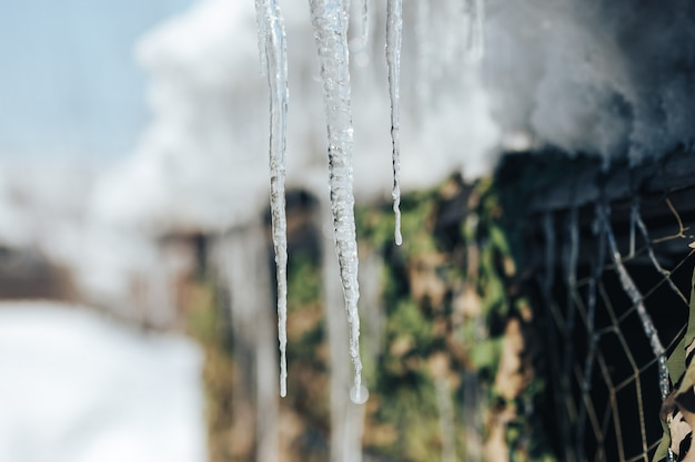 Spring icicle melts in sunlight. beautiful icicles glint
