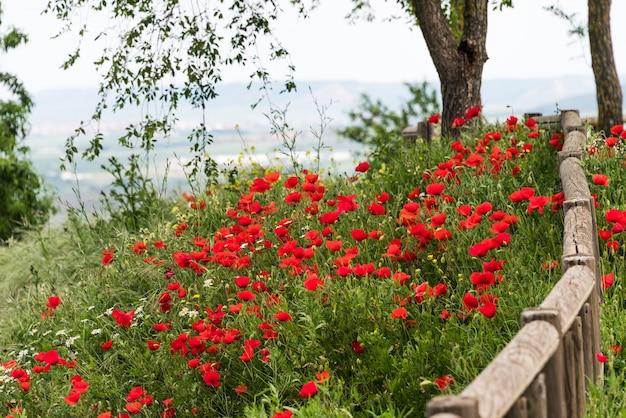 散歩でその素晴らしさのすべての春