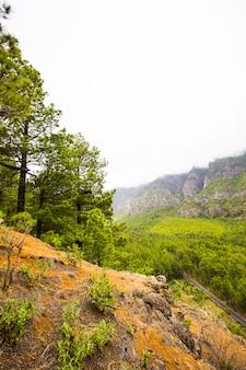 Cumbrecita의 봄, caldera de taburiente nature park, la palma island, canary islands, spain