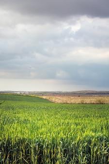 エルサレムの春
