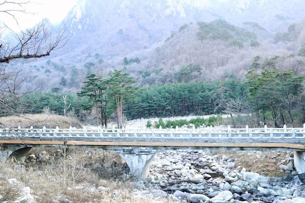 한국의 봄