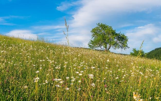 Весна в поле