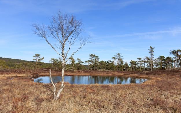 森の春、池の前に白irの木が茂るノルウェー