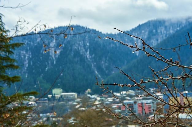 산에서 봄입니다. 물 한 방울과 나무의 분기입니다. 강설 후 해동.
