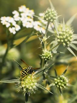 花マクロクローズアップ緑の自然の春の昆虫蜂