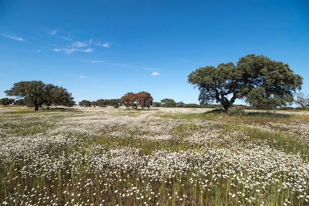 Spring landscape in alentejo