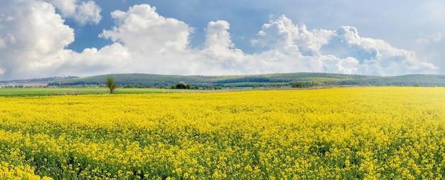 春の風景、咲く菜種畑、白いふわふわの雲と絵のように美しい空、パノラマ
