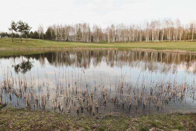 木々に囲まれた春の風景森の湖は、明るい日光と青い空を反射して穏やかな水面になります