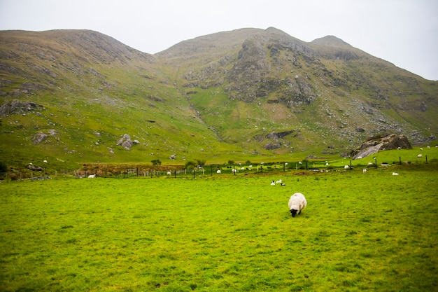 아일랜드의 숲에서 봄 풍경입니다.