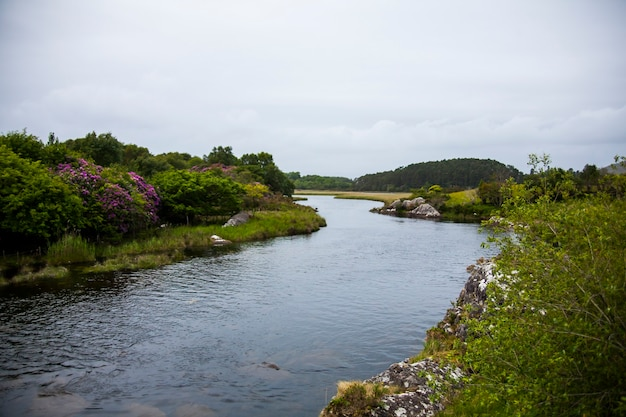 아일랜드의 땅에서 봄 풍경입니다.