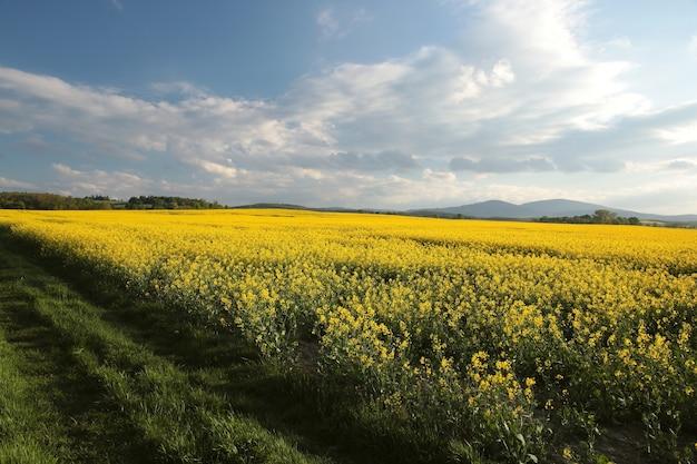 朝の春の風景