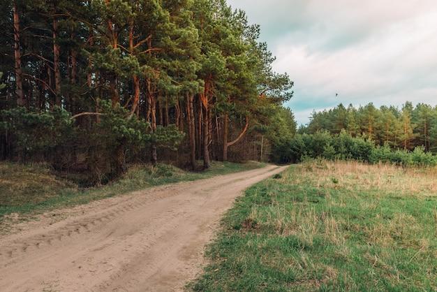 Весенний пейзаж лесной тропы на закате в беларуси.