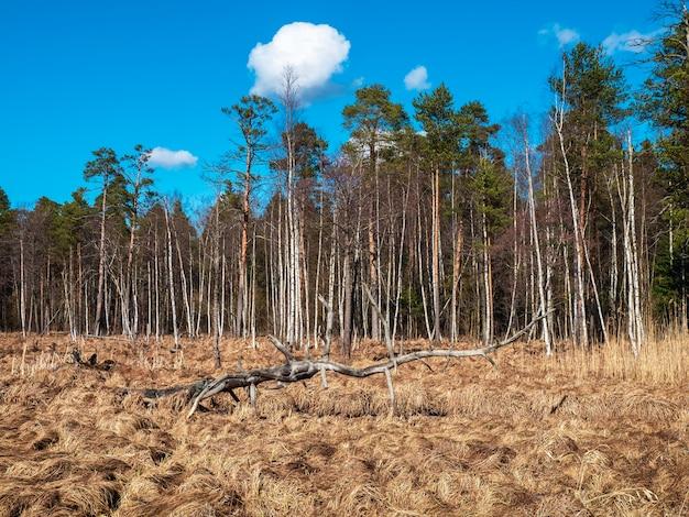 氾濫した沼に大きな障害がある春の風景。