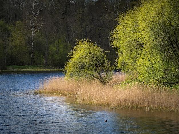 湖のほとりに木がある春の風景。