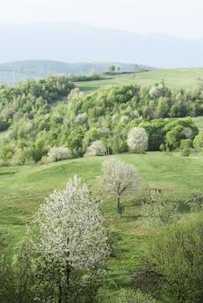 Весенний пейзаж с цветущими деревьями на зеленых холмах горной деревни